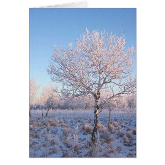 Luz solitaria Frost del árbol Tarjeta De Felicitación