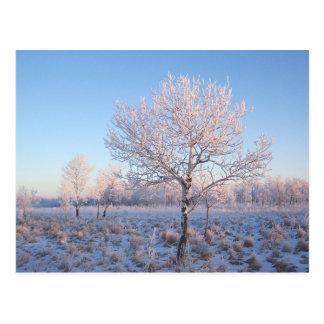 Luz solitaria Frost del árbol Postal