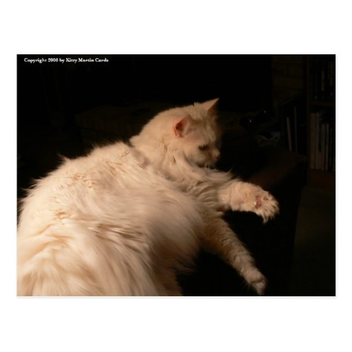 Luz y gato de la sombra tarjetas postales