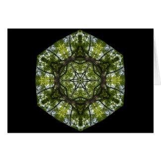 Luz y modelo en las hojas tarjetón