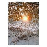 Luz y nieve felicitación
