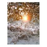 Luz y nieve postal