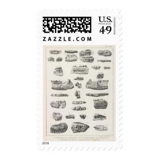 LXVI Hyracotherium, Meniscotherium Stamp