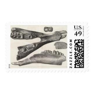 LXX Mastodon, Elephas Postage