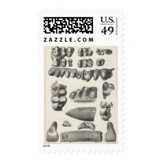 LXXI Mastodon productus Postage Stamp