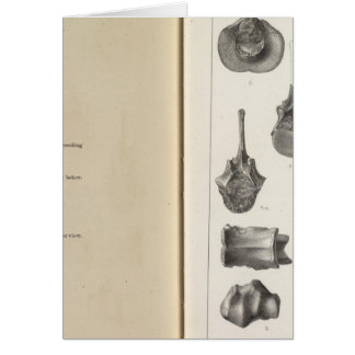 LXXVIII Procamelus occidentalis Card