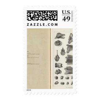 LXXVIII Procamelus occidentalis Postage Stamp