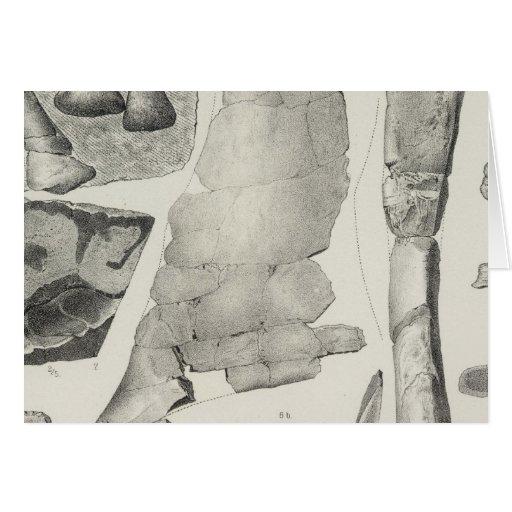 LXXXIII Dystrophaeus, Coryphodon Tarjetas
