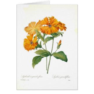 Lychnis Card