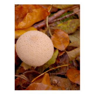 Lycoperdon puffball mushroom postcard