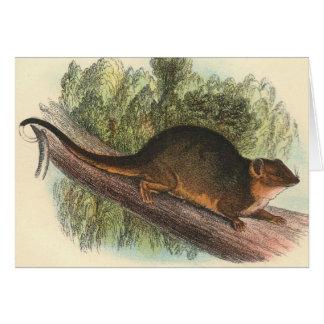 Lydekker - Common Ring-Tailed Phalanger/Possum Greeting Card
