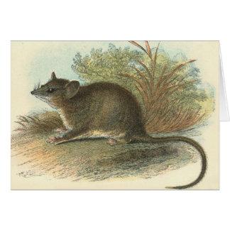 Lydekker - Dormouse común Phalanger/oposum Tarjeta De Felicitación