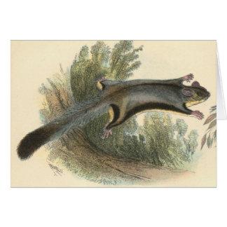 Lydekker - Lesser Flying Phalanger/Possum Greeting Card