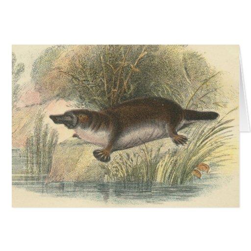 Lydekker - Platypus Greeting Cards