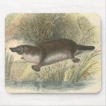 Lydekker - Platypus Mousepad