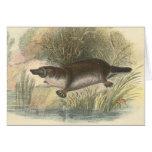 Lydekker - Platypus Tarjeta De Felicitación