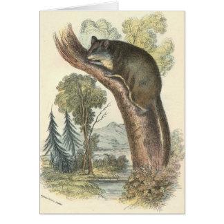 Lydekker - Pygmy Flying Phalanger/Possum Stationery Note Card
