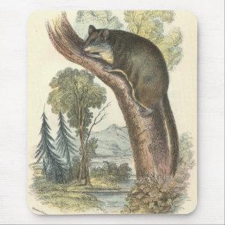 Lydekker - Pygmy Flying Phalanger/Possum Mouse Pad