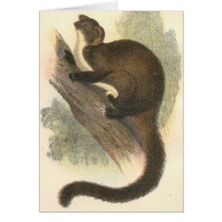 Lydekker - Taguan Flying Phalanger/Possum Greeting Card