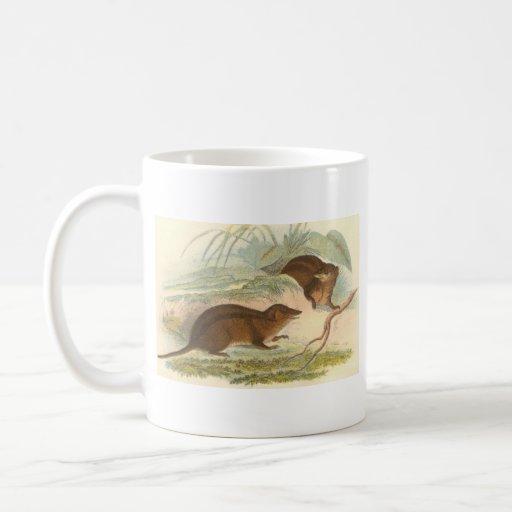 Lydekker - Three-Striped Opossum Bookstore Promo Classic White Coffee Mug