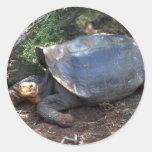 Lyin de la tortuga gigante de las Islas Galápagos  Etiquetas Redondas