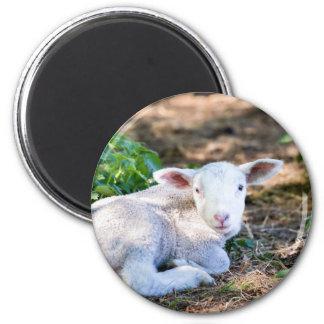 Lying lamb between nettle plants magnet