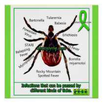 Lyme Disease & Co Infection Educational Chart