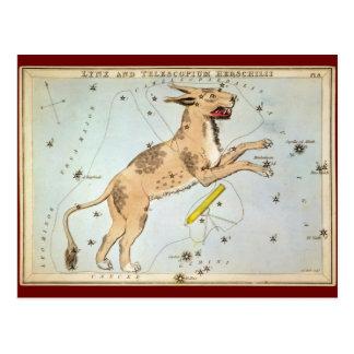 Lynx and Telescopium Herschilii Postcard