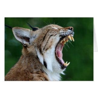 Lynx, bobcat beautiful blank greeting card