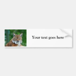 Lynx bobcat beautiful photo custom bumper sticker