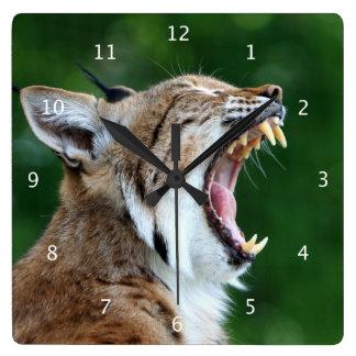 Lynx, bobcat beautiful photo funny fun square wall clock