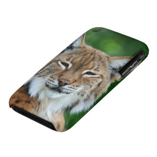 Lynx, bobcat beautiful photo iphone 3G case mate