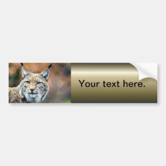 Lynx Bobcat Wildlife Predator Cat Bumper Sticker