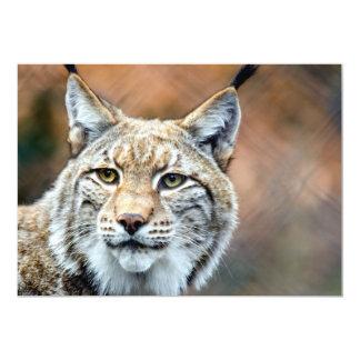 Lynx Bobcat Wildlife Predator Cat Card