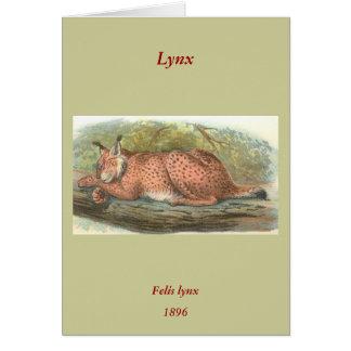 Lynx, Felis lynx Greeting Card