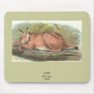 Lynx, Felis lynx Mouse Pad