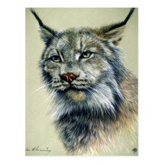 Lynx (head study) postcard