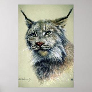 Lynx (head study) poster
