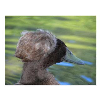 Lynx Lake Waterfowl Postcard