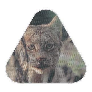 Lynx, Lynx canadensis, Denali National Park, Bluetooth Speaker