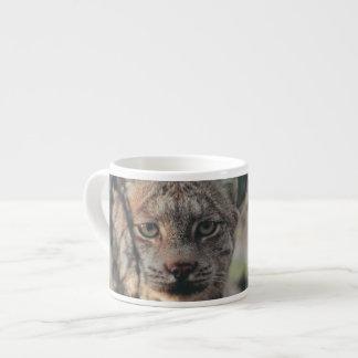 Lynx, Lynx canadensis, Denali National Park, Espresso Cup