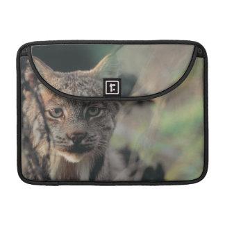 Lynx, Lynx canadensis, Denali National Park, Sleeve For MacBook Pro