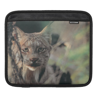 Lynx, Lynx canadensis, Denali National Park, Sleeves For iPads