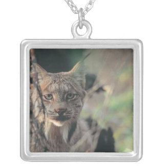 Lynx, Lynx canadensis, Denali National Park, Square Pendant Necklace