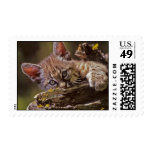 Lynx Postage Stamps
