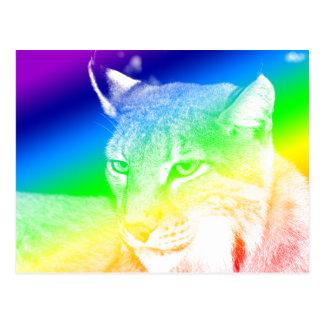 Lynx Rainbow Highlights Postcard