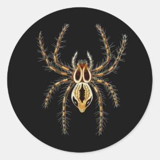 Lynx Spider Classic Round Sticker