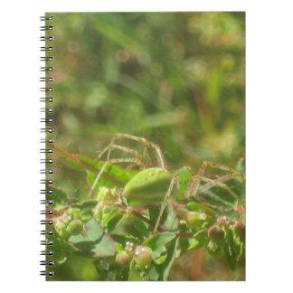 Lynx Spider Notebook