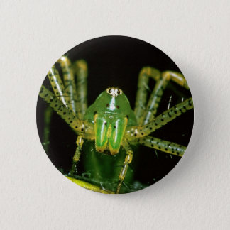 Lynx Spider Pinback Button