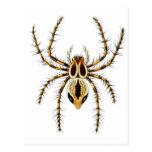 Lynx Spider Post Card